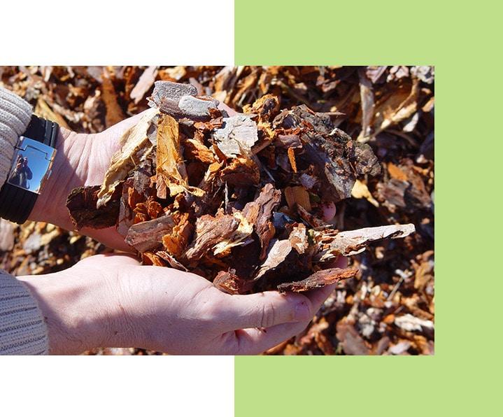 apisa-tratamientos-biomasa